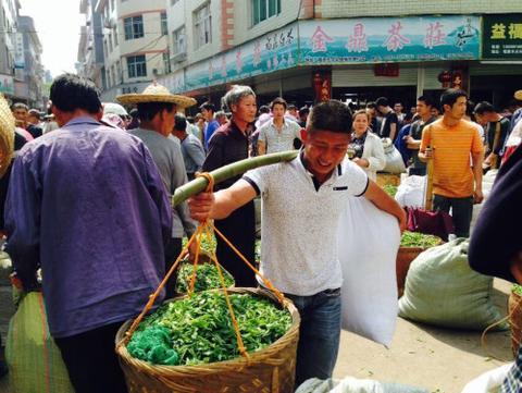 Fu Ding White Tea Fresh Leaf Market