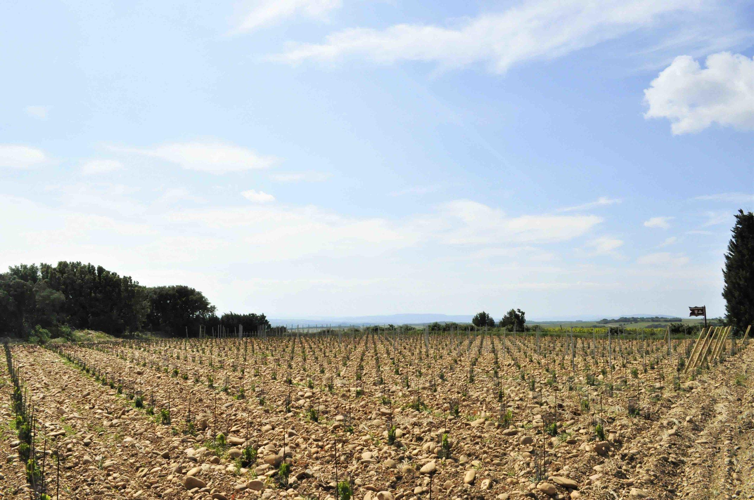 Rhone Vines 6 low res.jpg