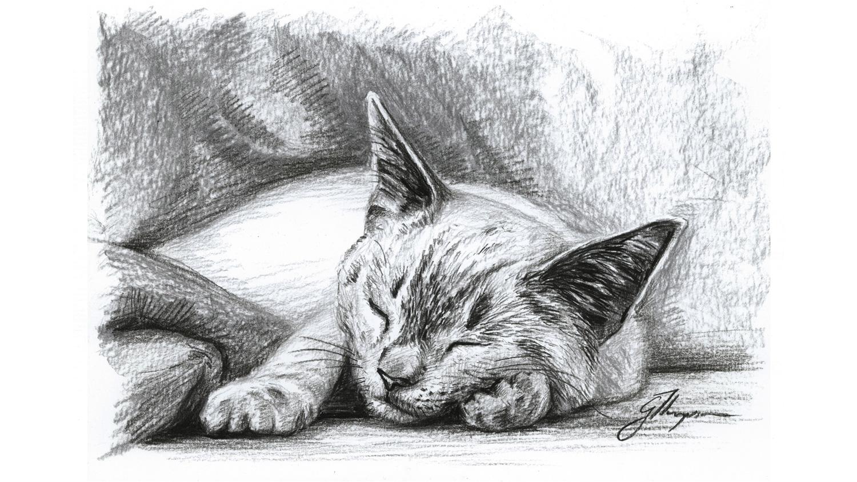 blog-20-Days-bentley-asleep.jpg