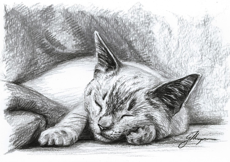 gallery-drawing-bentley-asleep.jpg