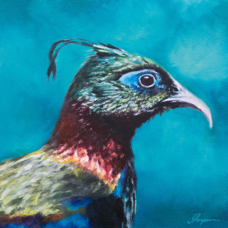 gallery-impeyan-pheasant.jpg