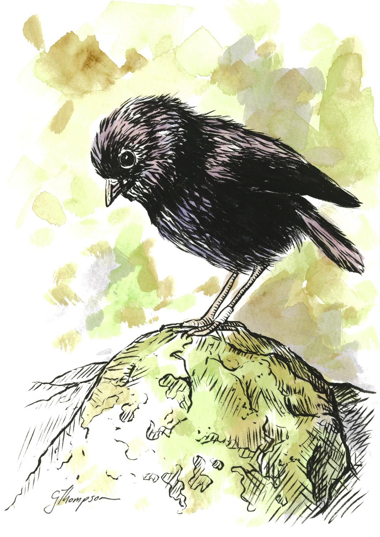 Old Blue Black Robin