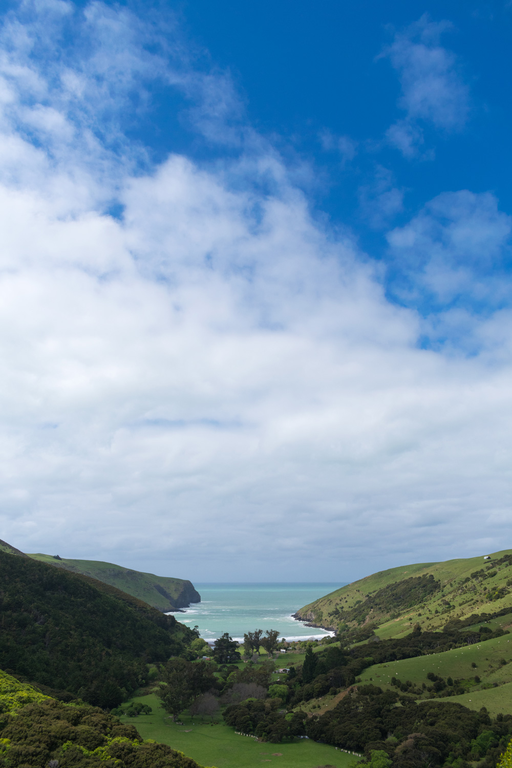 blog-hinewai-artist-retreat-walk-view5.jpg