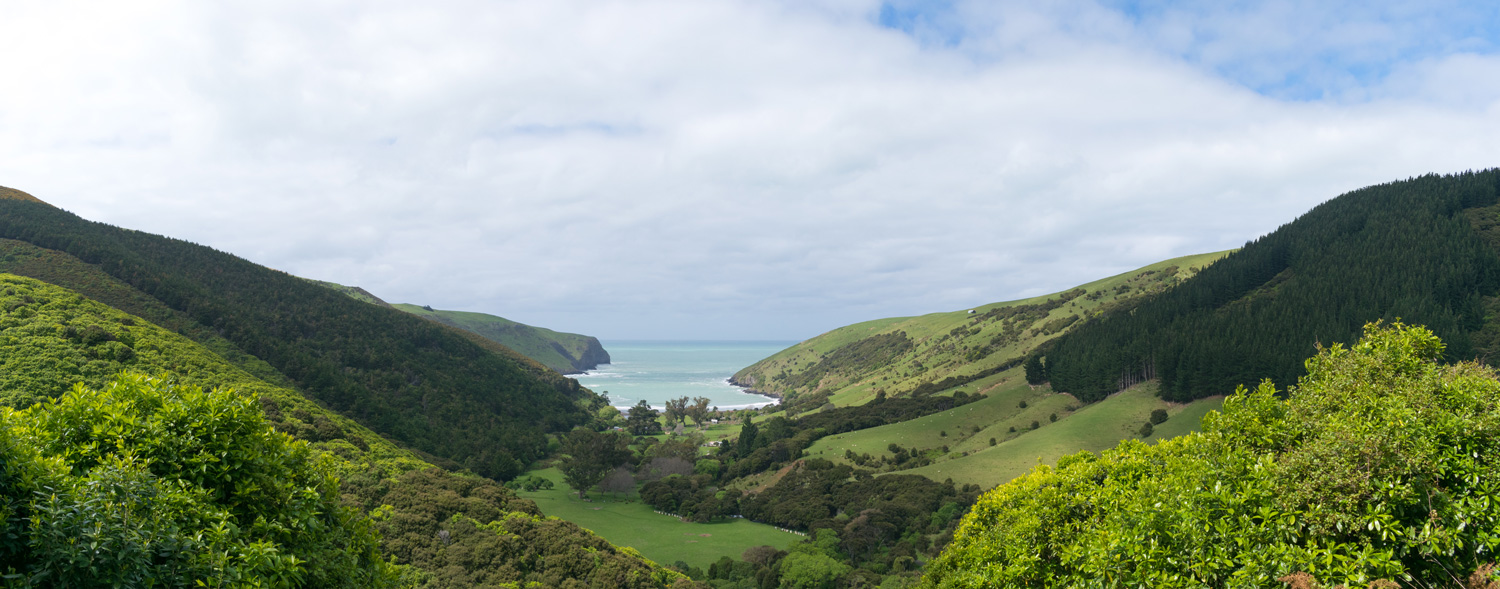 blog-hinewai-artist-retreat-walk-view6.jpg