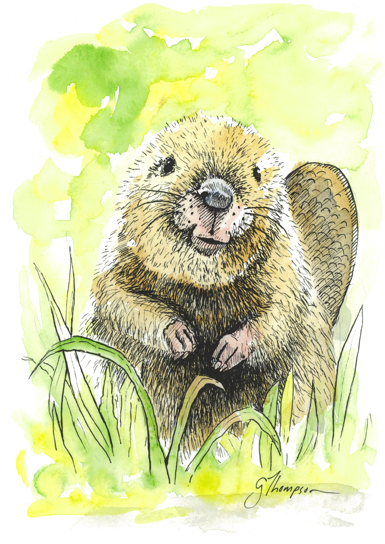 Beaver Cuteness