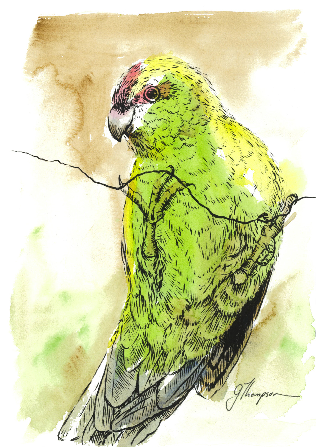 Cheeky Kakariki - FOR SALE $90