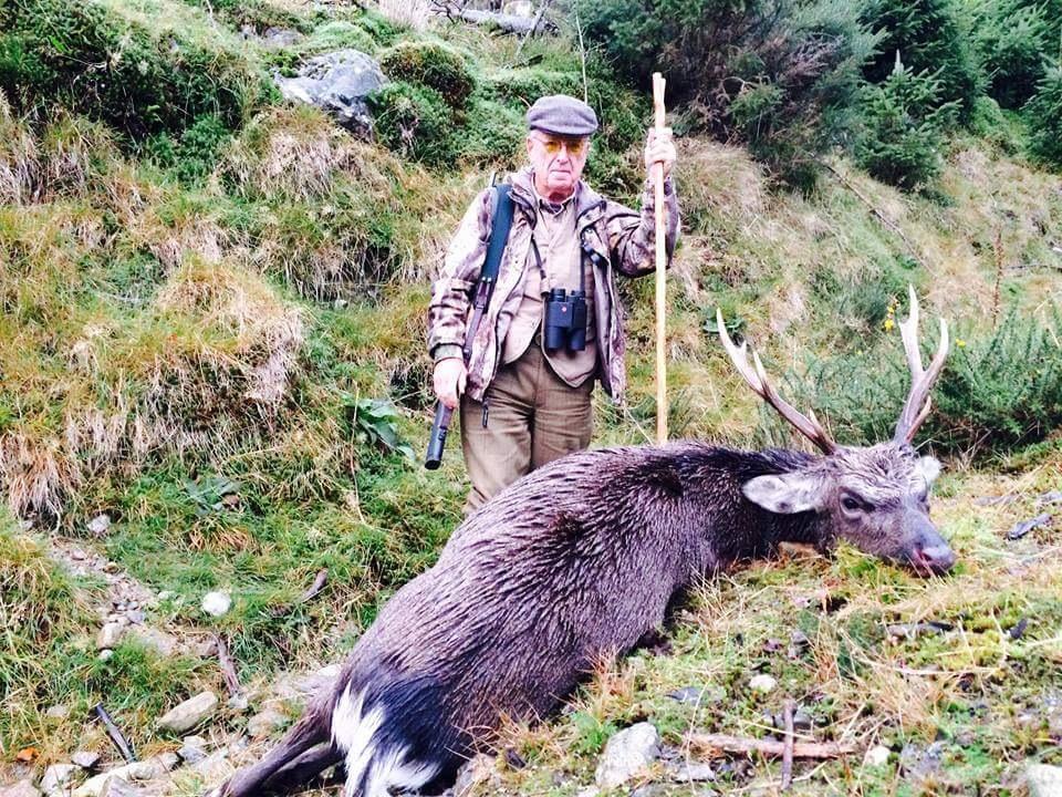 Sika Hunting Ireland (6).JPG