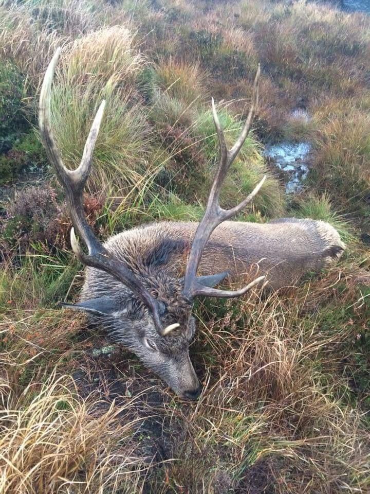 Sika Hunting Ireland (15).JPG