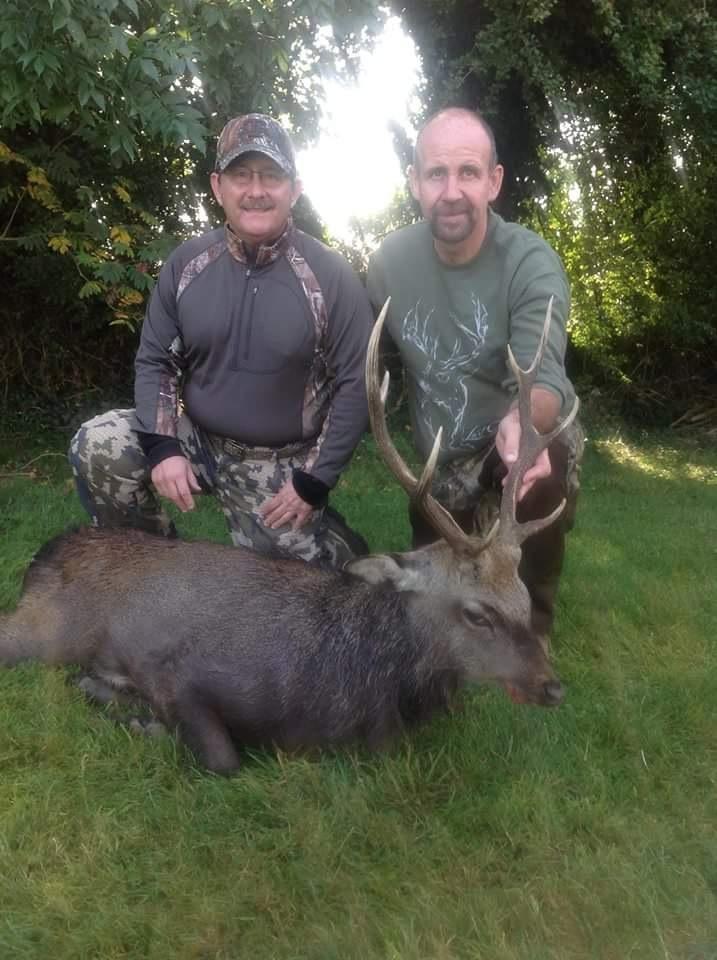 Sika deer (3).JPG