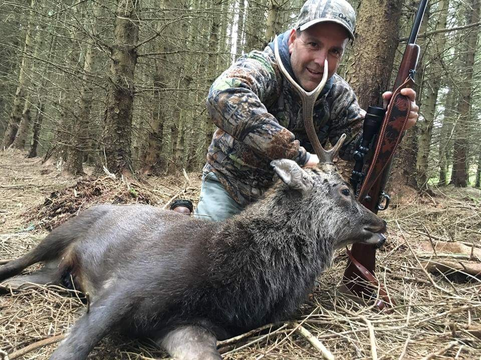 Sika Deer (8).JPG