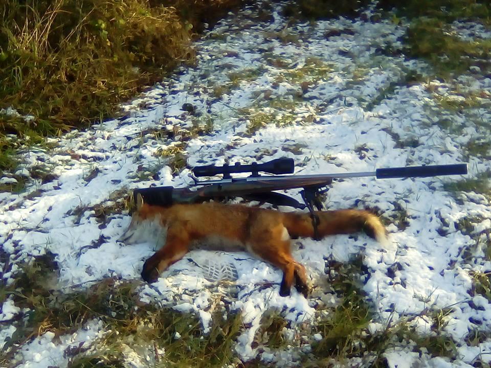 Irish Fox Shoot.jpeg