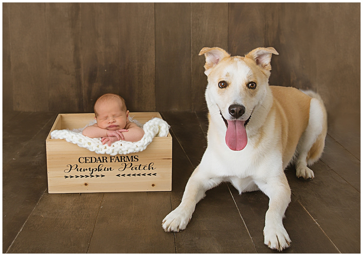newborn baby in a box with dog next to him in burlington new jersey studio