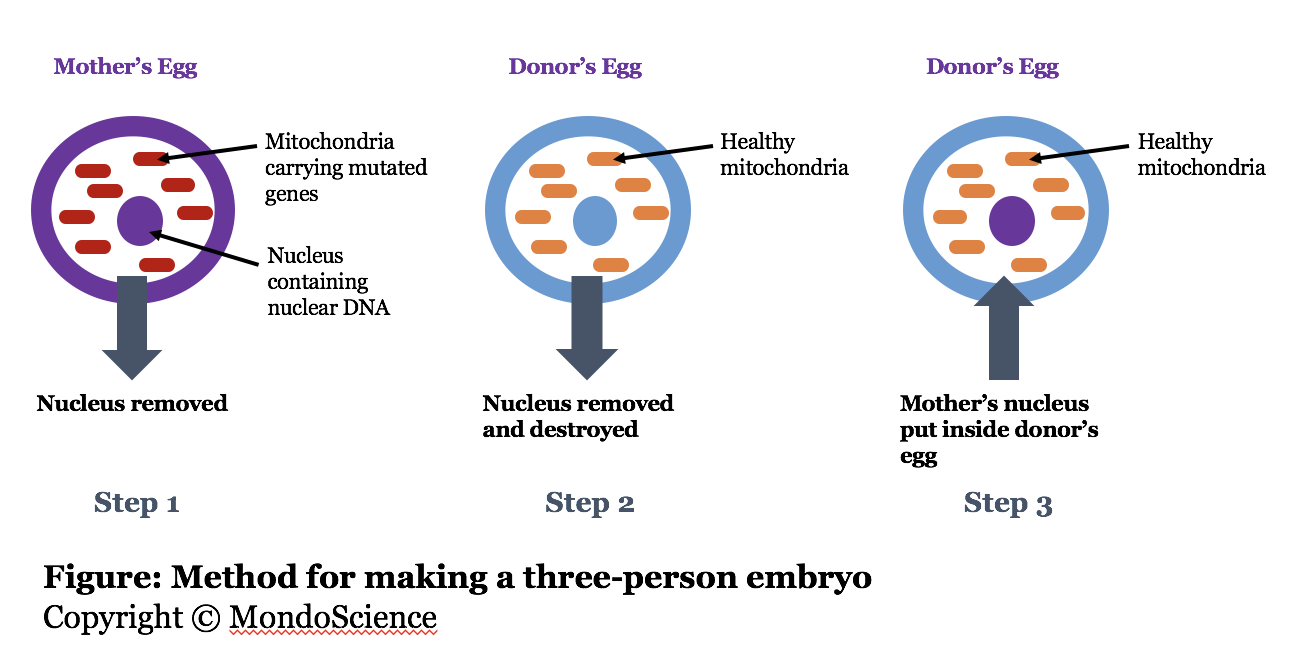 three-person embryo making method