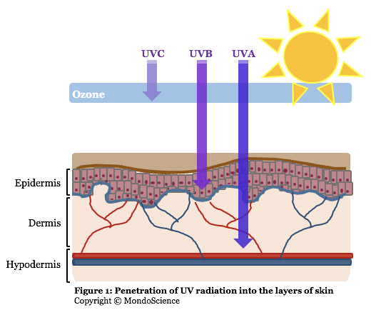 UV radiation and the skin