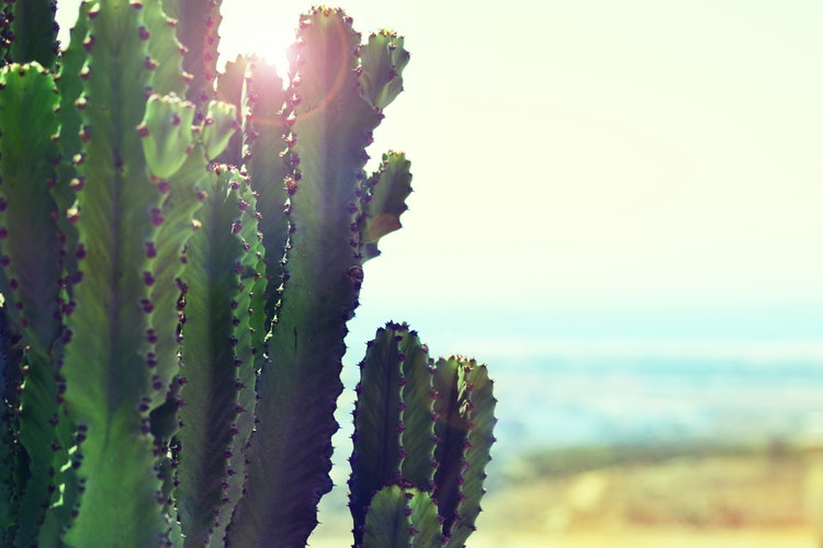 cactus in the sun.jpg
