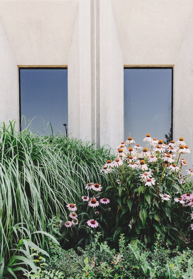 perennial plant aginst building.jpg