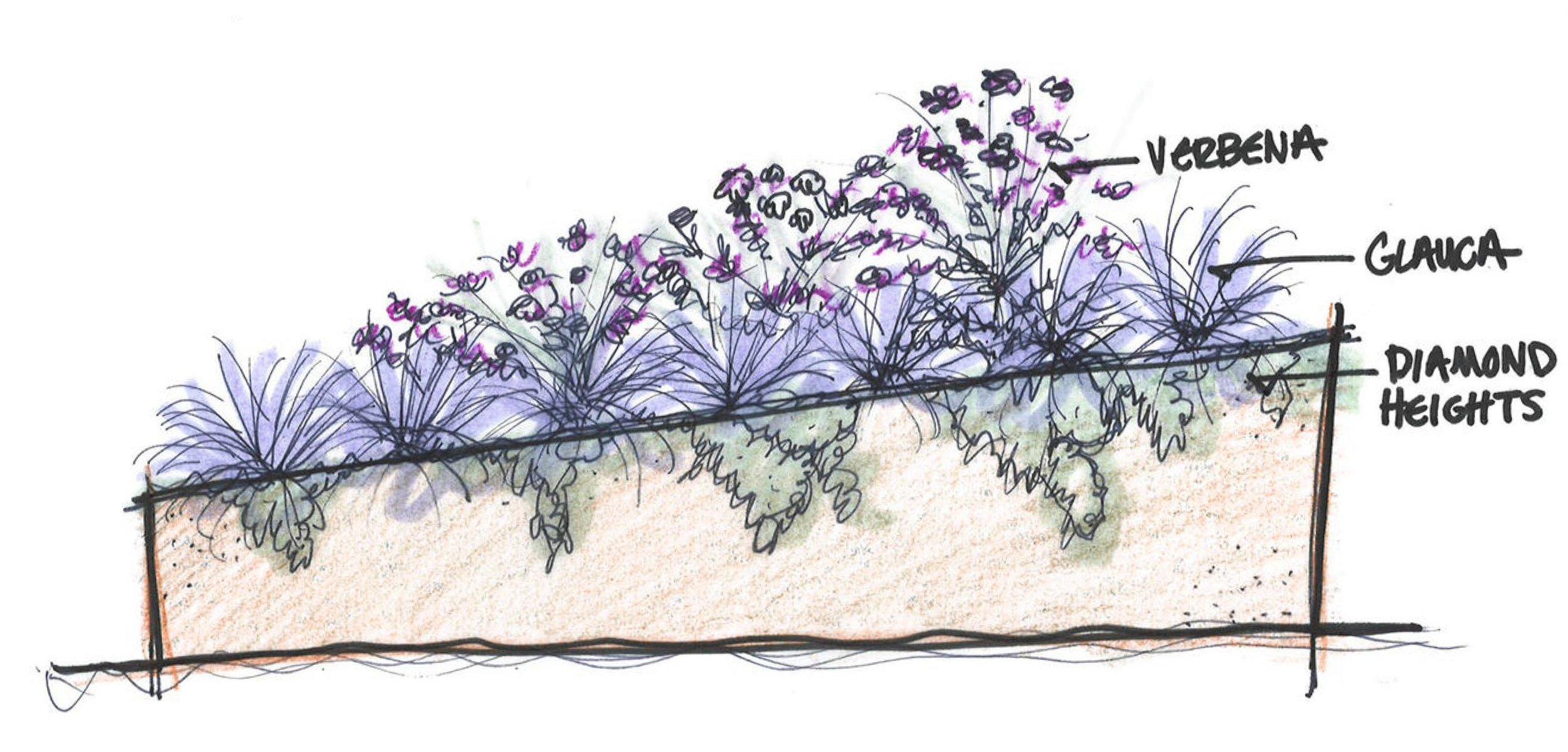 corten sketch with planting.jpg