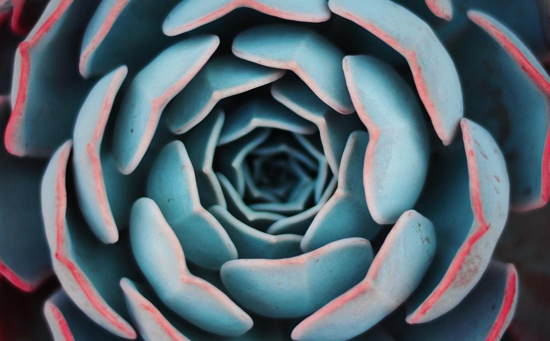 blue succulent.jpg