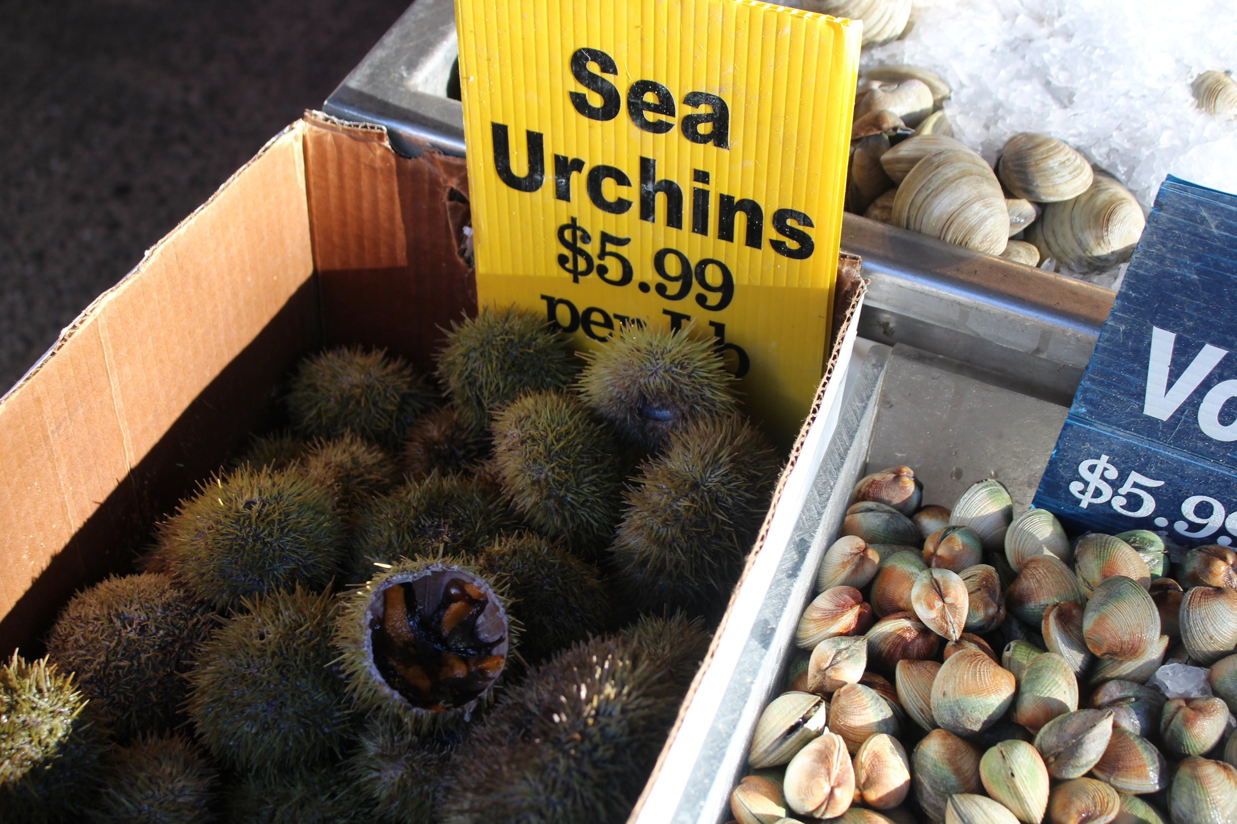 Sea urchins or ricci for sale at Cosenza's Fish Market