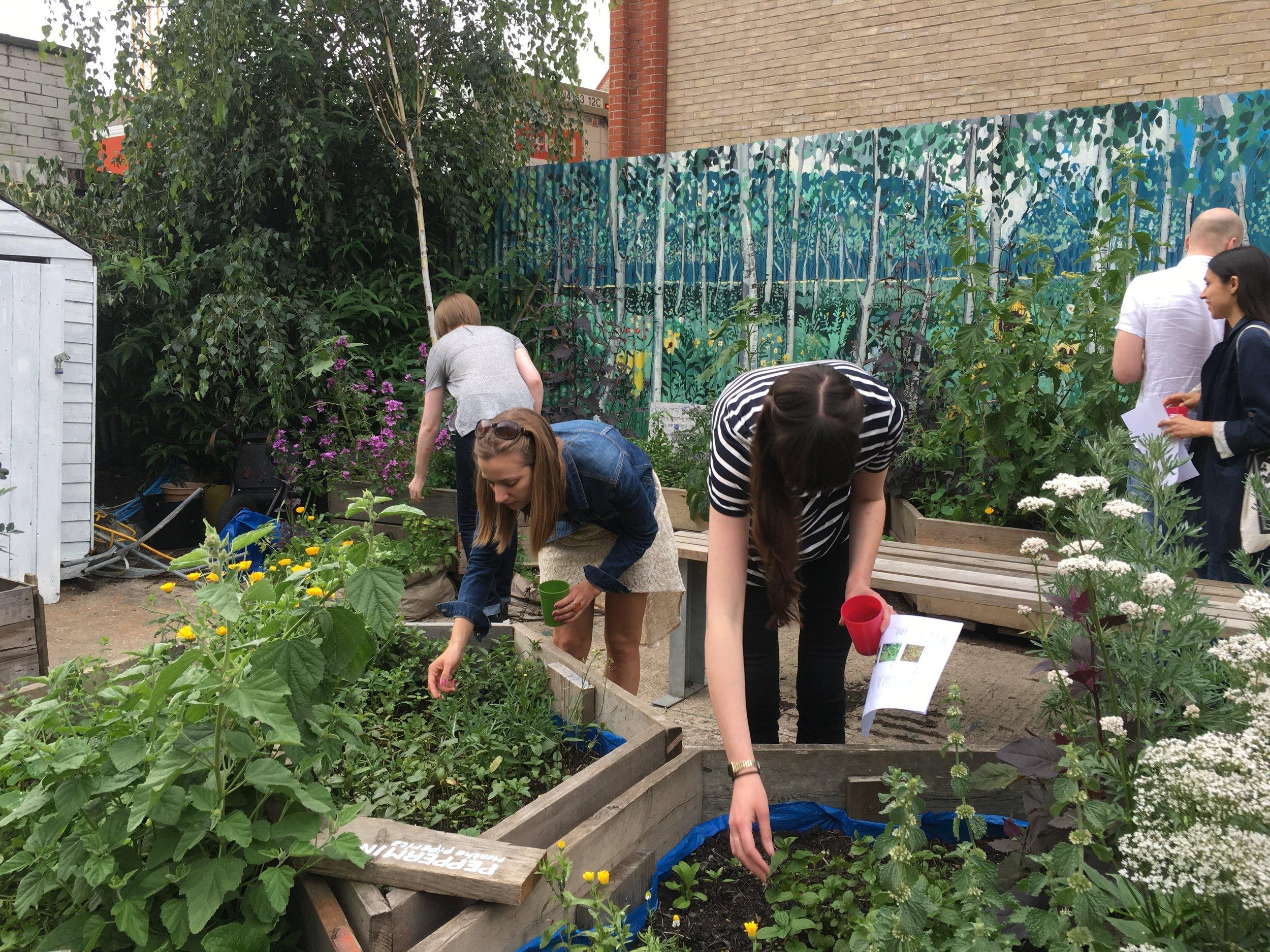 bee garden workshop.JPG
