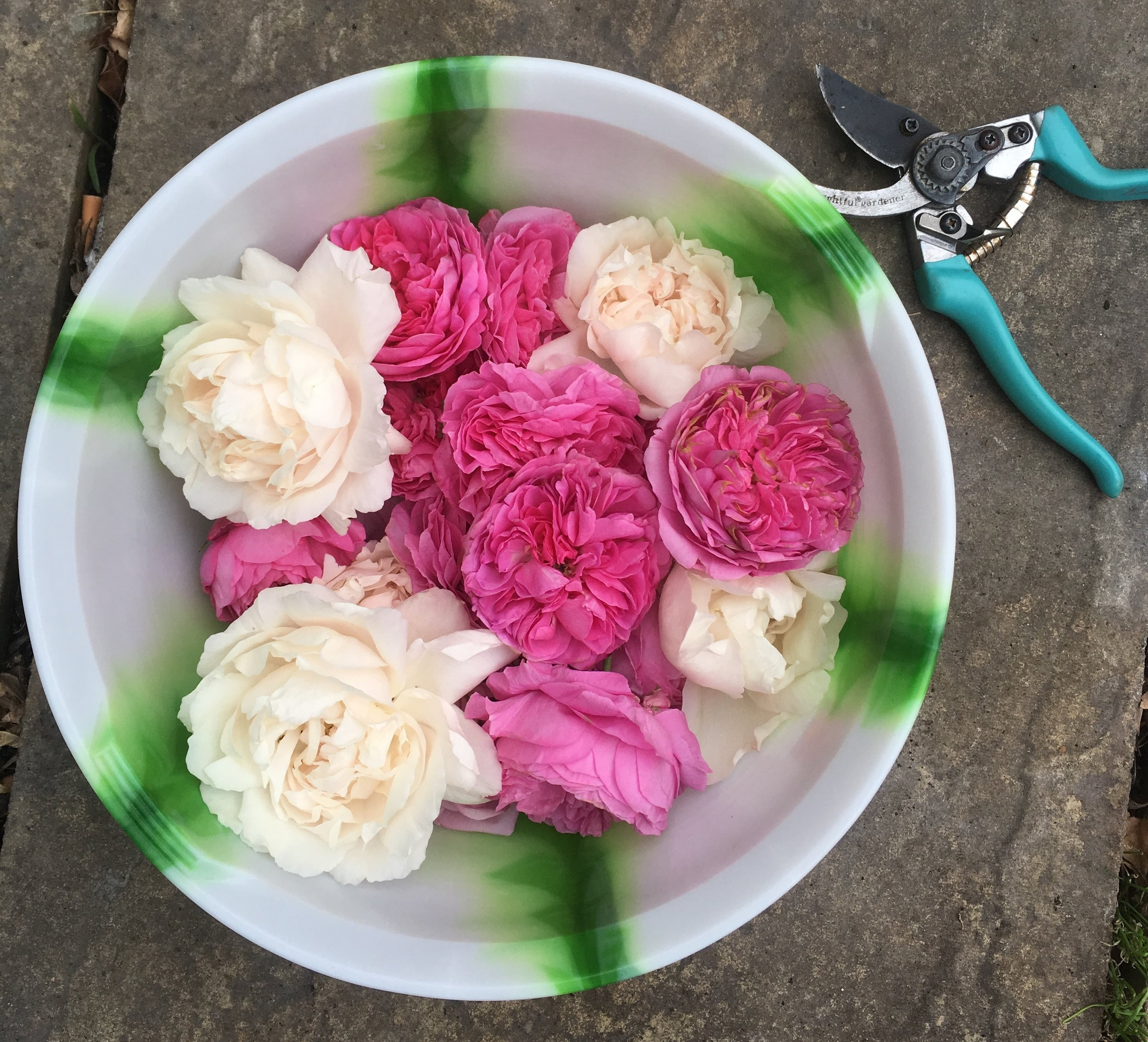 Floral roses - use a clean container to collect your flowers as you harvest them