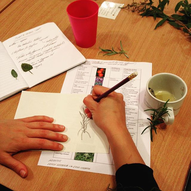 🌿Herbal Craft🌿our 6-week community course will soon be back at The Centre for Better Health. The course is a great introduction to using herbs in fun and creative ways.  This term the course will be led by Roses and @Camila.beetroot and will start on Wednesday 20th Feb, 6.15-7.45pm. Discover some of London's incredible wild herbs, make practical herbal remedies, and unearth some history of herbs in health. Themes include: 🌿Getting to know plants with your senses 🌿Boosting health with seasonal herbs 🌿Power and liberation in herbs and healing 🌿Taking herbs through the skin and mouth 🌿Introduction to growing your own  To book on please contact the centre on 0208 9853570 or via email admin@centreforbetterhealth.org.uk