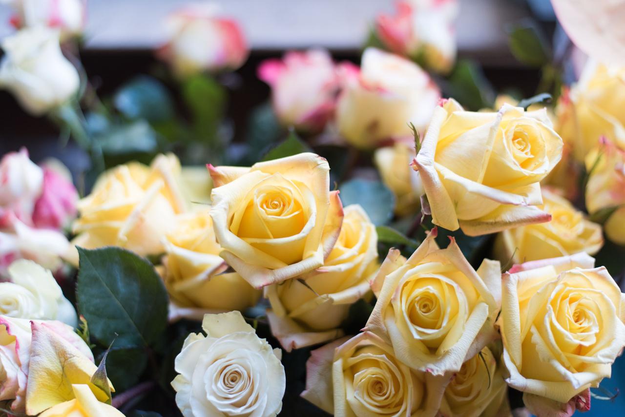 florence flower2.jpeg