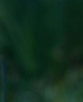 grön.jpg