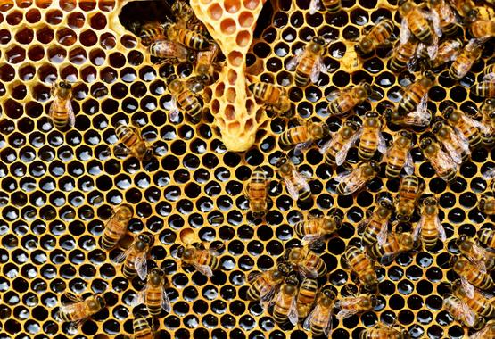 Goldstrike Honeybee Company - Lillooet Honey