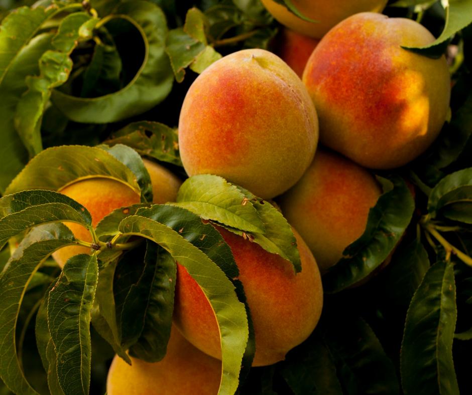 Aig Produce Osoyoos - Fresh Fruit