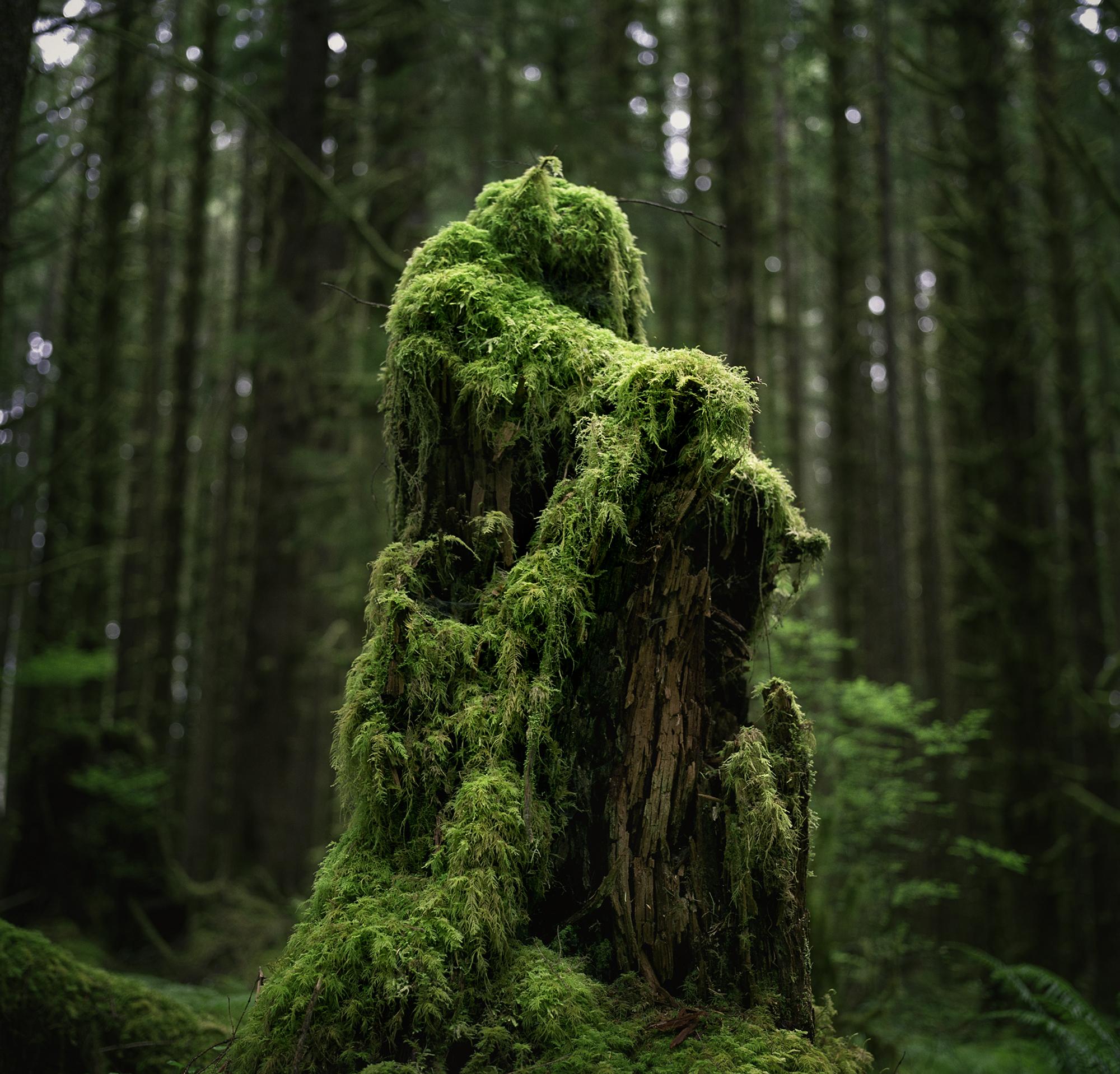 hoh stump 21v2.jpg