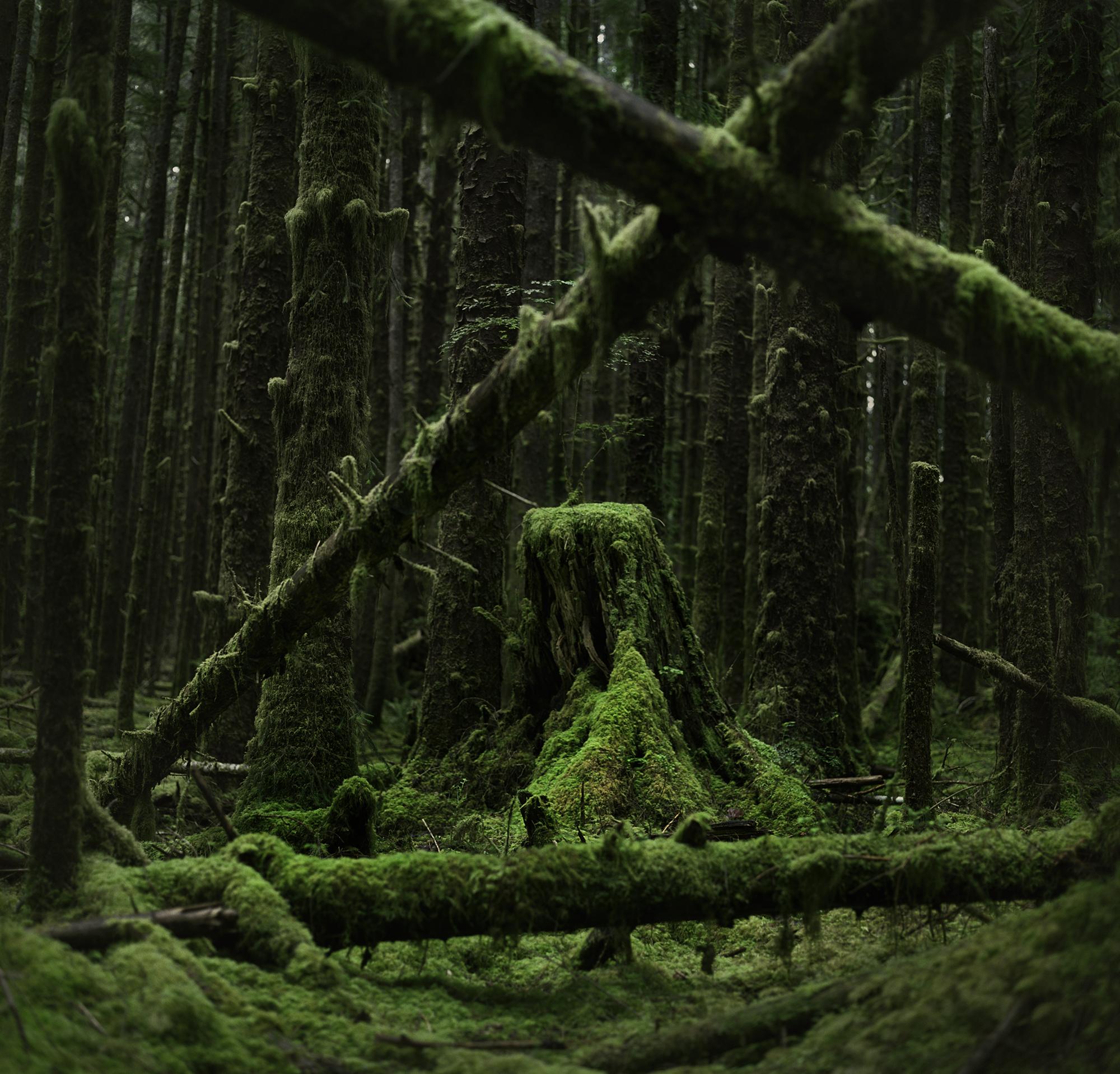 hoh stump crossed logsv2.jpg