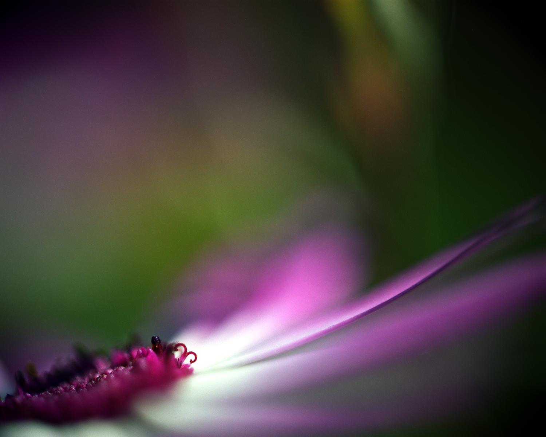 purple flower against green.jpg
