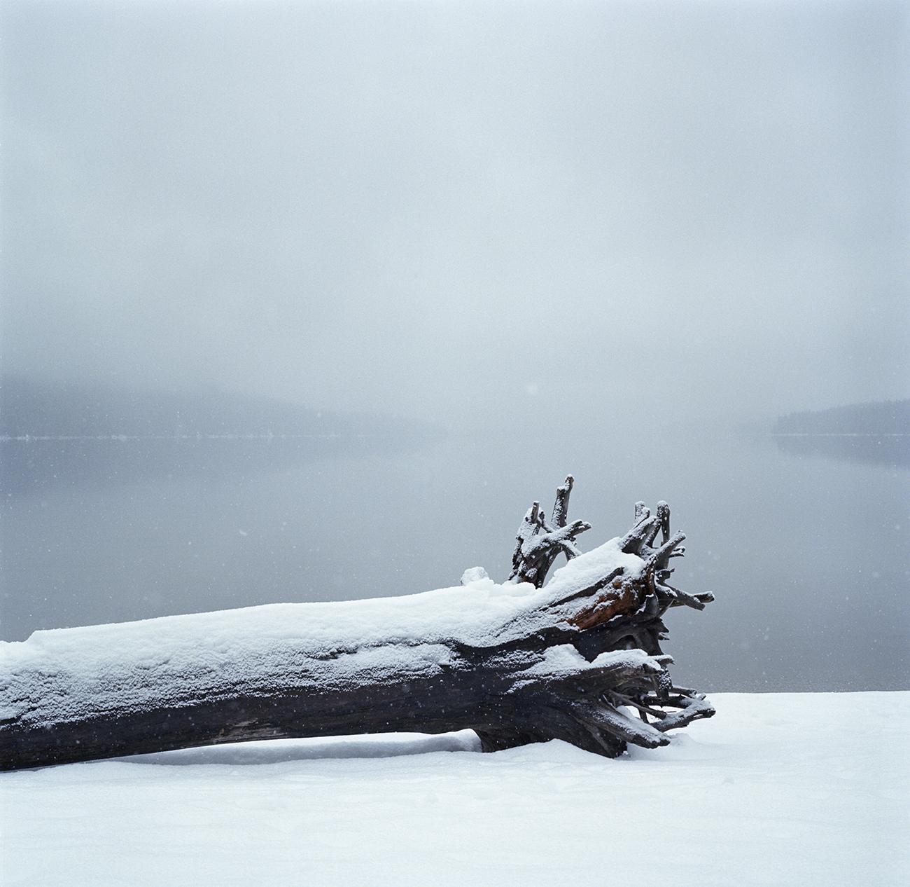 lake wenatchee fallen tree hblad.jpg
