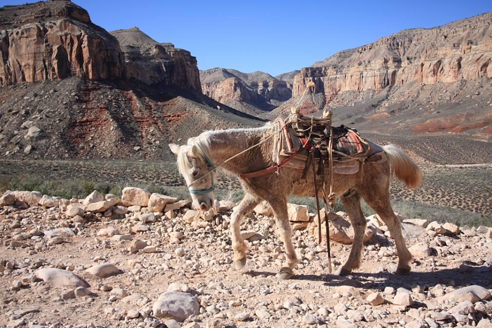 lone-packhorse.jpg