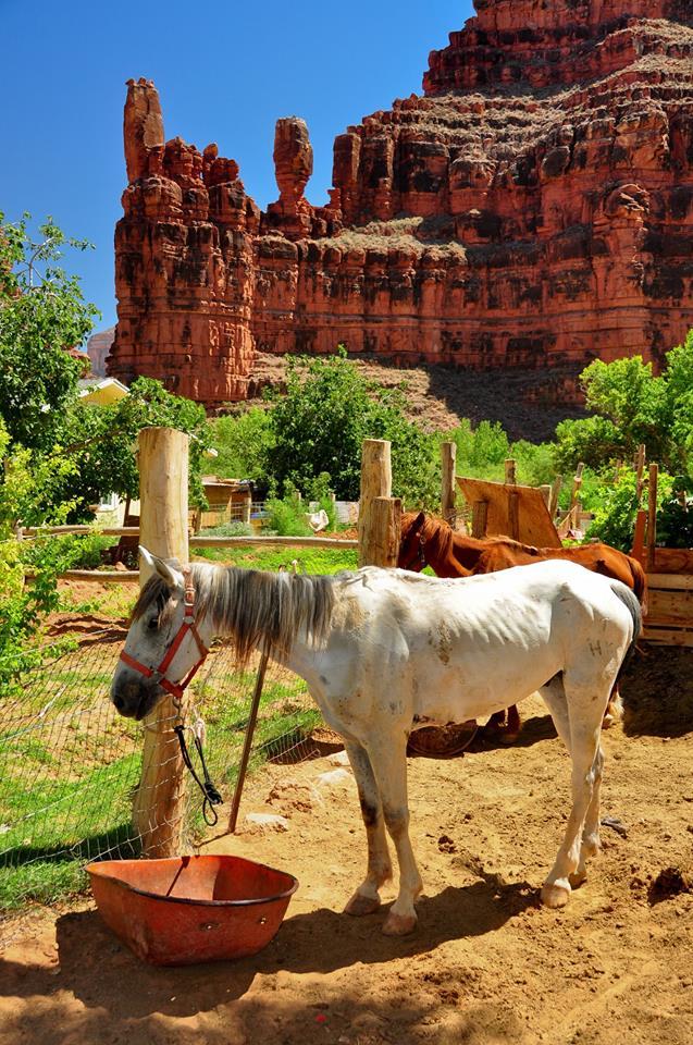 whitehorse-village.jpg