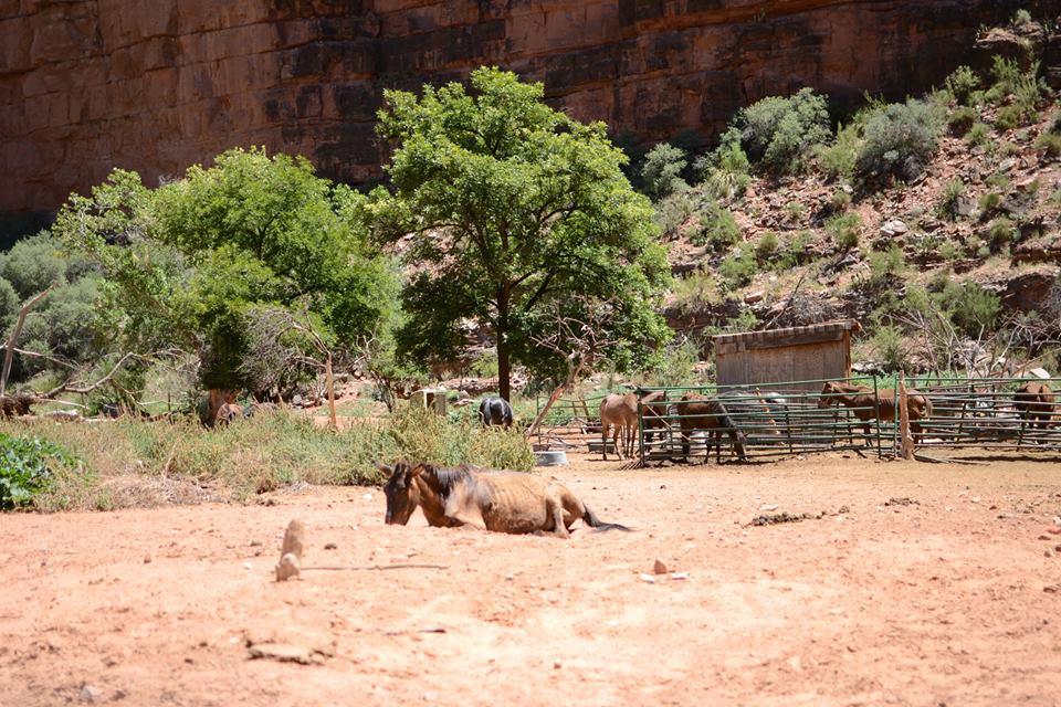 villagehorses.jpg