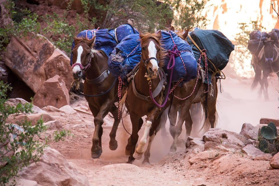 horsesrunning.jpg