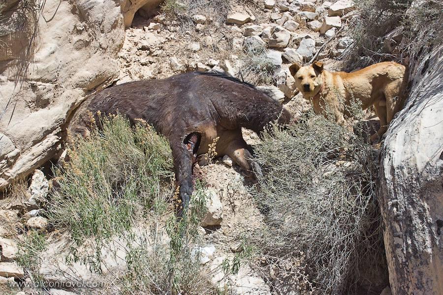 horsecarcass1.jpg