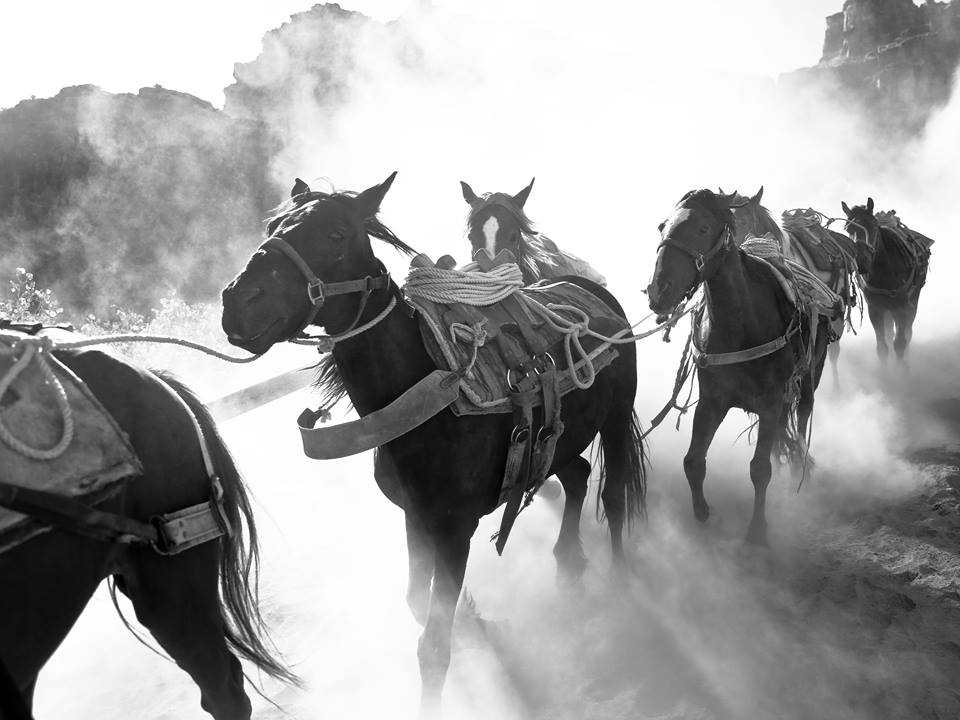 dustyhorses.jpg