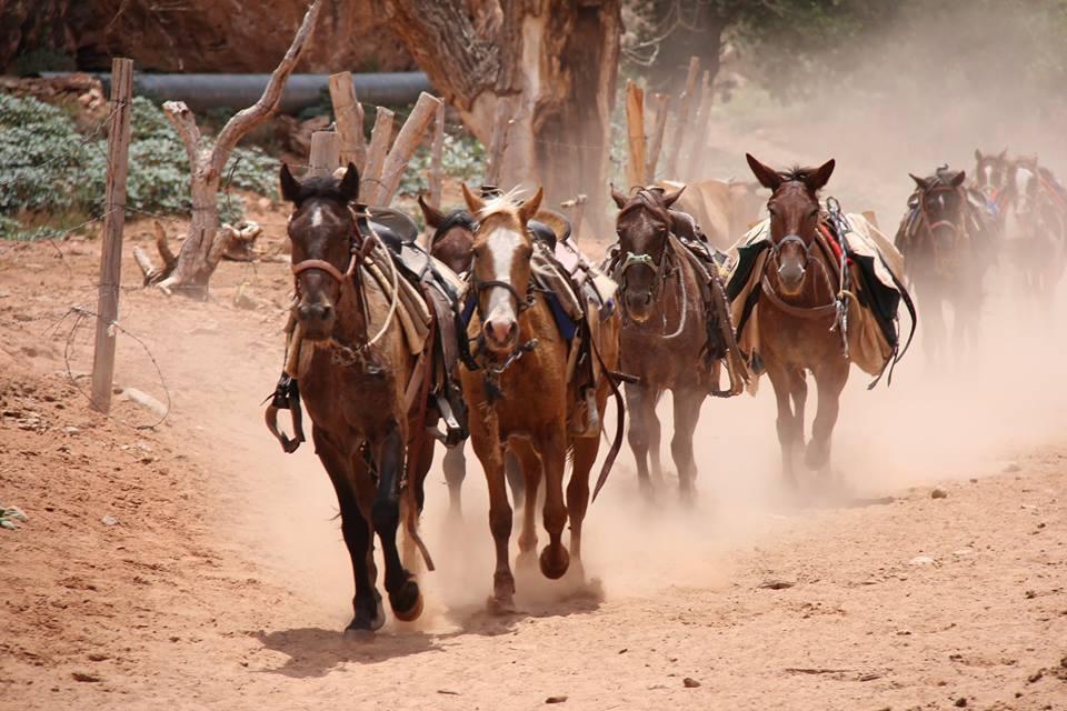 horsesrunning4.jpg