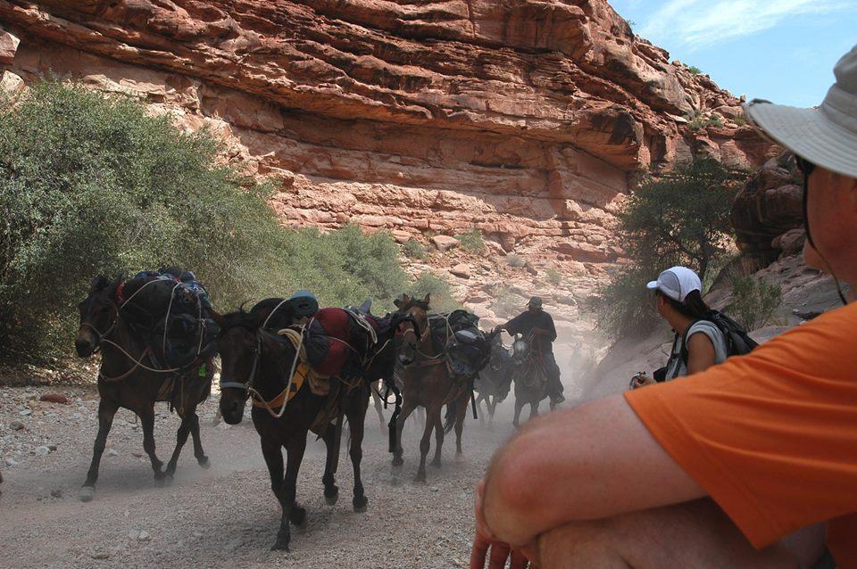 horsesrunning5.jpg
