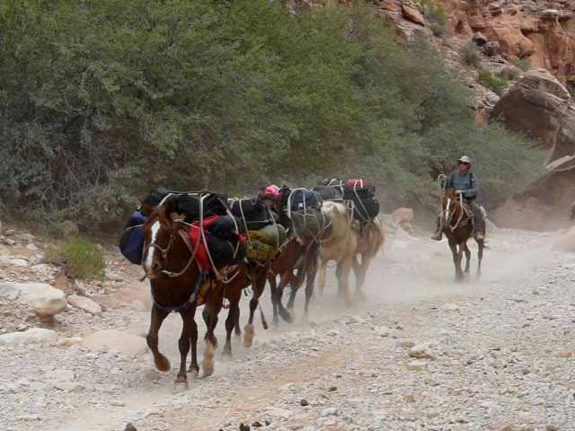 horsesrunning8.jpg