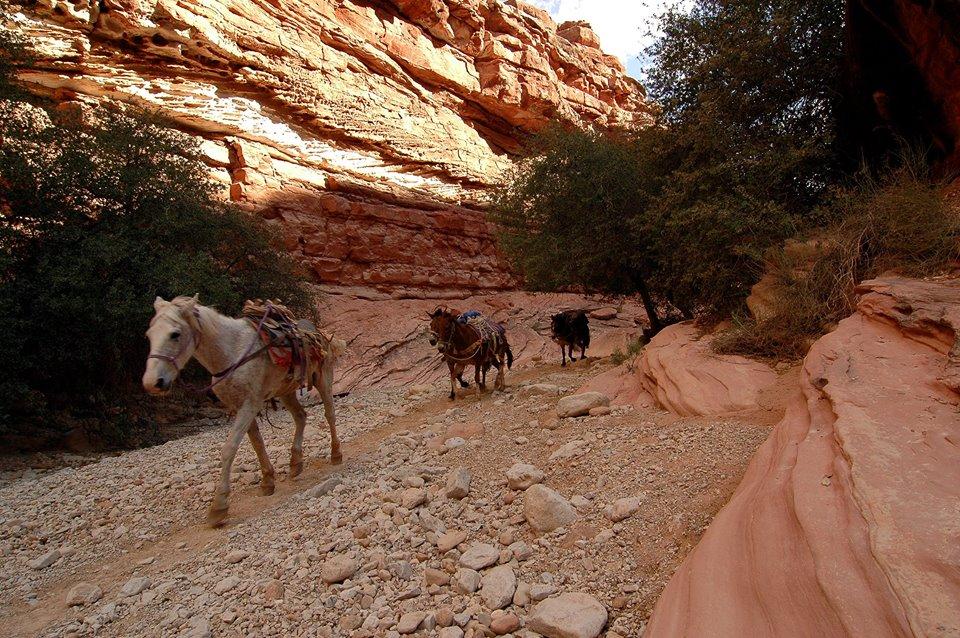 horsesrunning7.jpg