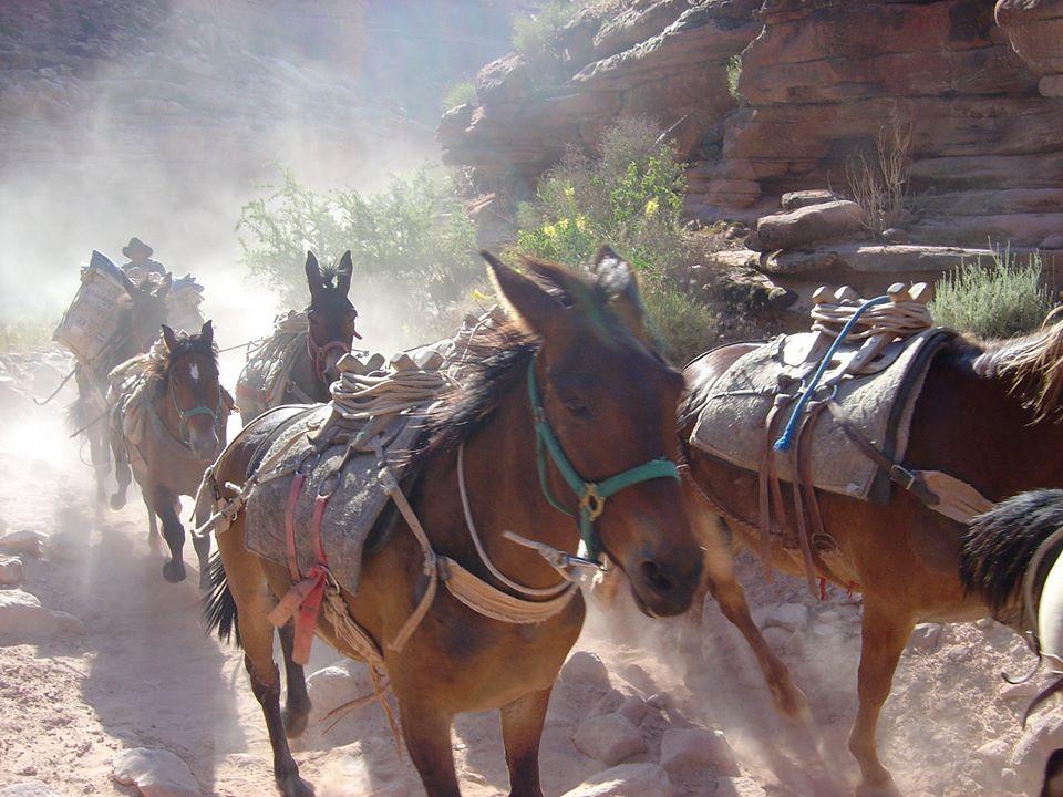 horsesrunning9.jpg