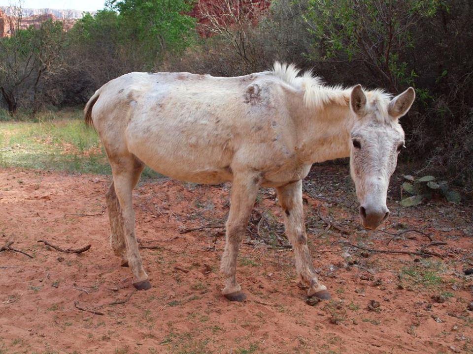whitedonkey1.jpg