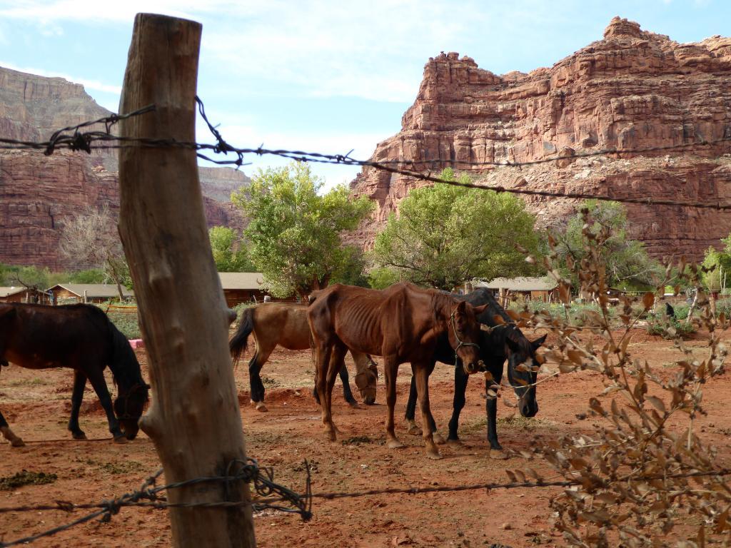 imprisoned_horses.jpg