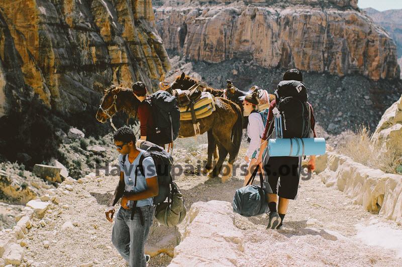 tourists-thinhorses.jpg