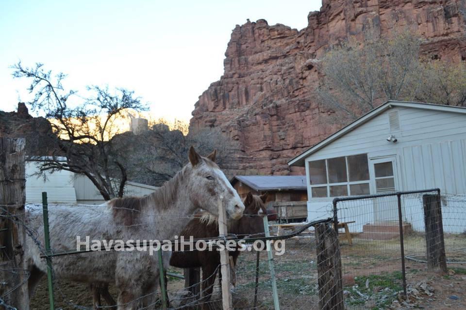 Jan24_horse1_wm.jpg