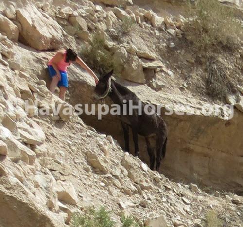 horseandmulefall-crop1.jpg